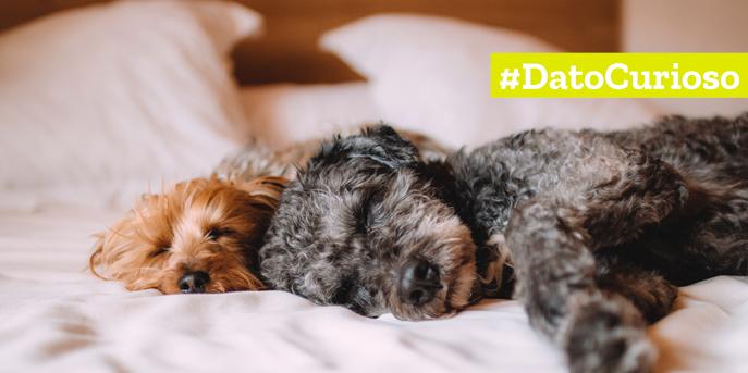 Según estudio de Clínica Mayo, Estados Unidos: Dormir con tu perro mejora la calidad de sueño