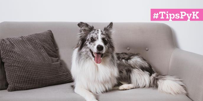 Cuidado de perros grandes en departamentos o en casas pequeñas