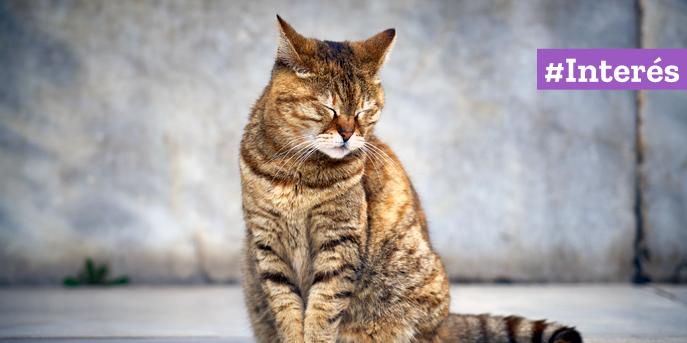 Al igual que en los humanos, el estrés en los gatos puede causar problemas en la salud